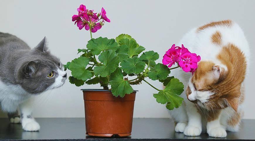 Ядовитые домашние растения | хиллс