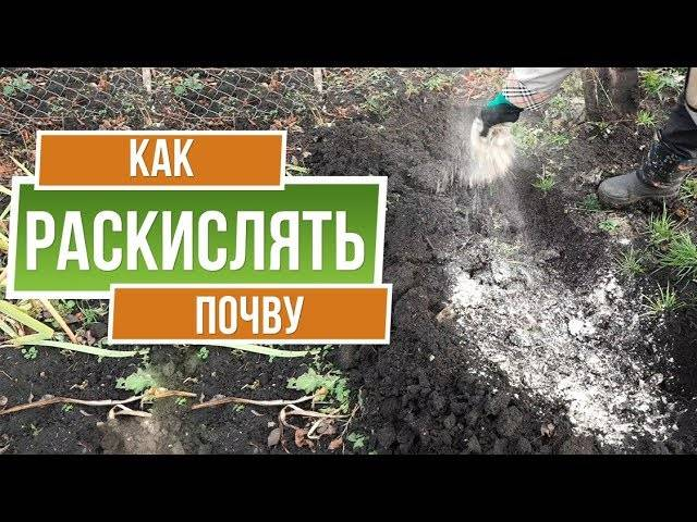 Известкование почвы: фото, видео, для чего, чем и когда раскисляют почву