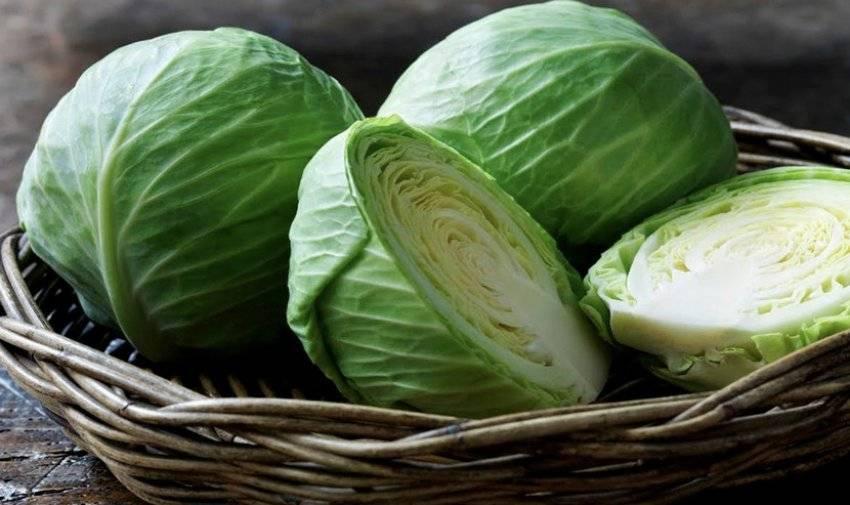 Кольраби польза и вред капусты для организма