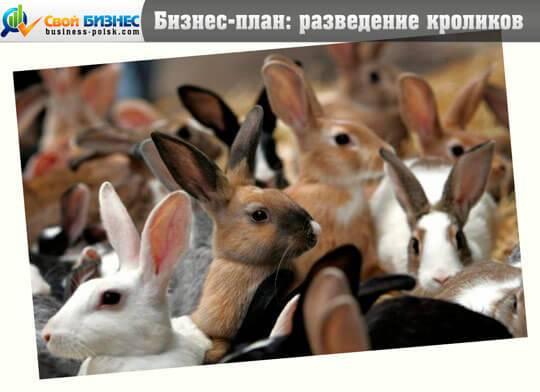 Бизнес-план по разведению кроликов - «жажда» - бизнес-журнал