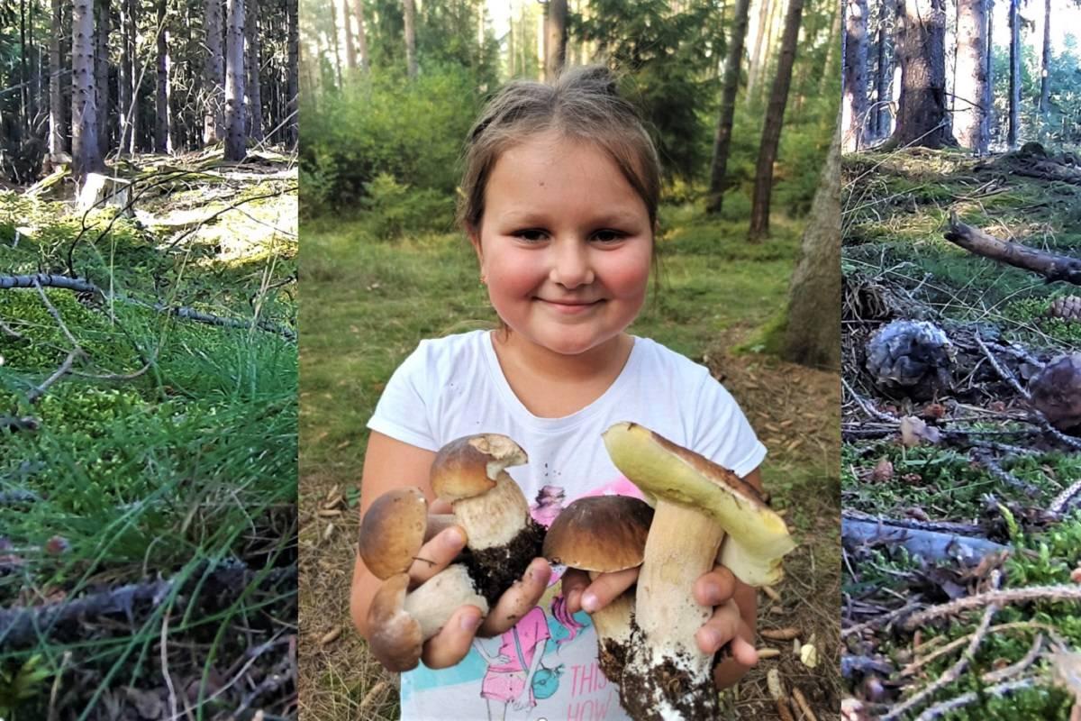 Закон о сборе грибов и ягод в российской федерации