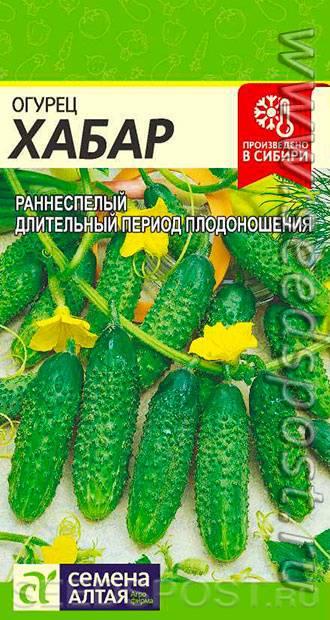 Характеристика сорта огурцов хабар - агро журнал pole39.ru