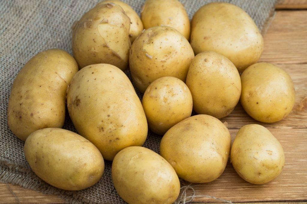 Высококачественный семенной сорт картофеля «джелли»: описание, характеристика и фото
