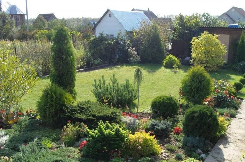 Неприхотливое украшение вашего сада — западная туя «колумна»