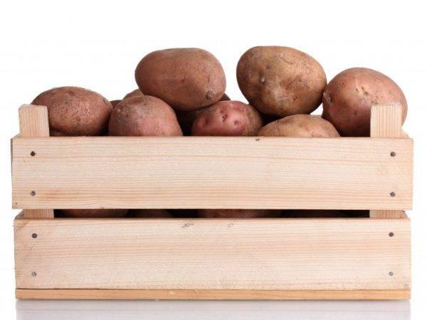 Хранение картофеля: как правильно проводить в домашних условиях, необходимая температура, в том числе зимой на балконе квартиры
