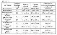 Инкубация перепелиных яиц: режим, температура, таблица