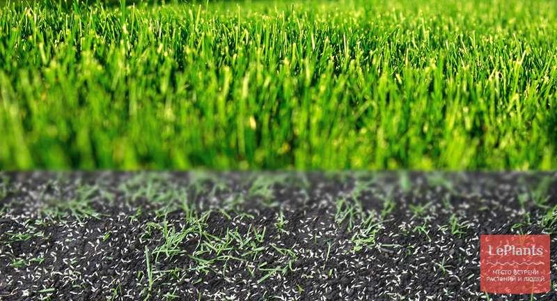 Посев газона весной своими руками: поэтапная инструкция с фото