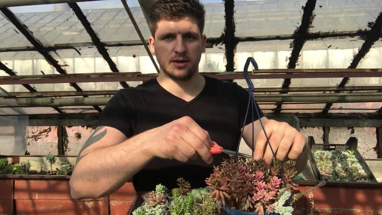 Почвопокровные растения: выбор, описание и фото на supersadovnik.ru