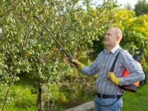 Инсектофунгицид нитрофен: инструкция по применению для опрыскивания сада и меры предосторожности