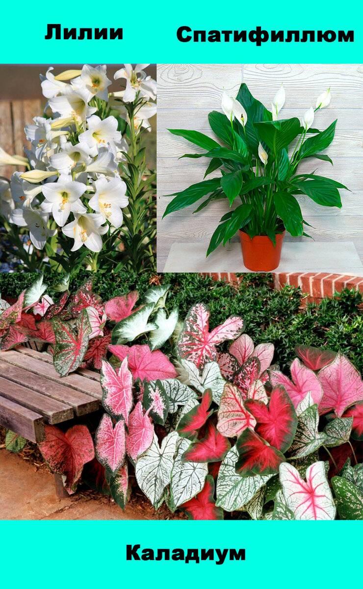 Экзотичный замиокулькас: ядовитый цветок или нет? признаки отравления, первая помощь, меры предосторожности