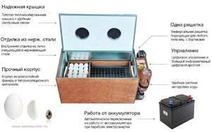 Как сделать инкубатор для яиц в домашних условиях: описание и схемы
