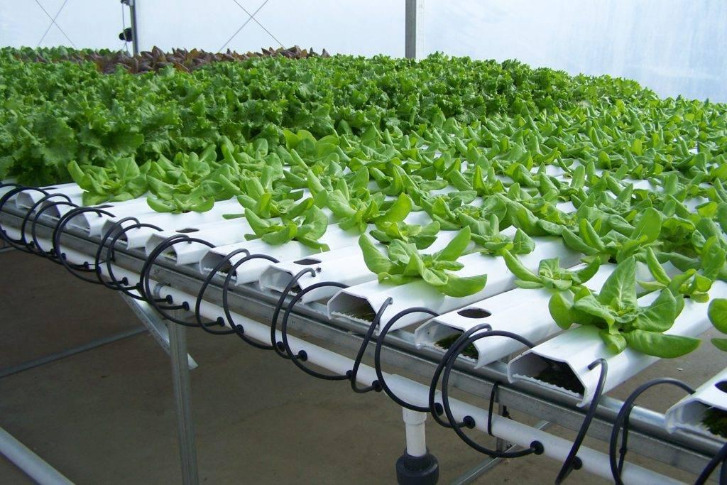 Сравнение методов выращивания зелени традиционным способом и гидропоники в домашних условиях