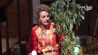 Почему вянут макушки томата в теплице?