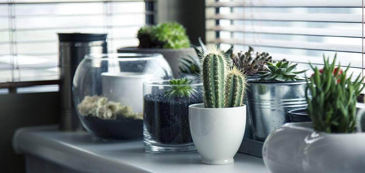 Самые неприхотливые растения для офиса: названия и фото