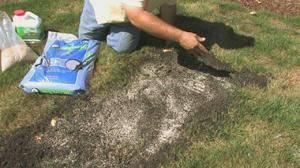 Посадка газонной травы осенью - особенности и основные правила + видео и фото