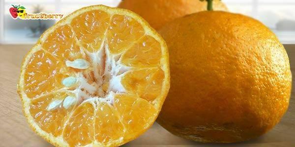 Апельсины: польза и вред для здоровья | польза и вред