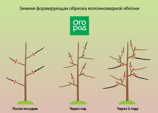 Обрезка абрикоса осенью для начинающих: видео + схема + инструкция