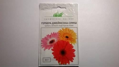 Герберы из семян в домашних условиях: как выращивать, как правильно произвести посадку комнатного цветка и ухаживать за ним?дача эксперт