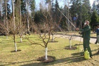 Укрытие яблонь на зиму в сибири: как и чем утеплить, фото