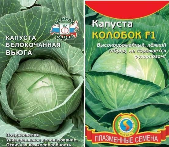 Лучшие сорта капусты для открытого грунта для засолки, квашения и хранения на зиму и отзывы о них