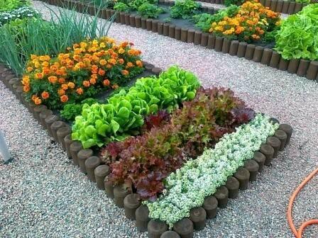 Совместимость растений в саду и огороде. совместимость растений - хорошее соседство в саду и огороде.   дачная жизнь