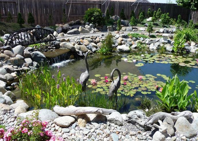 Выбор водных растений для пруда на даче, их виды и особенности