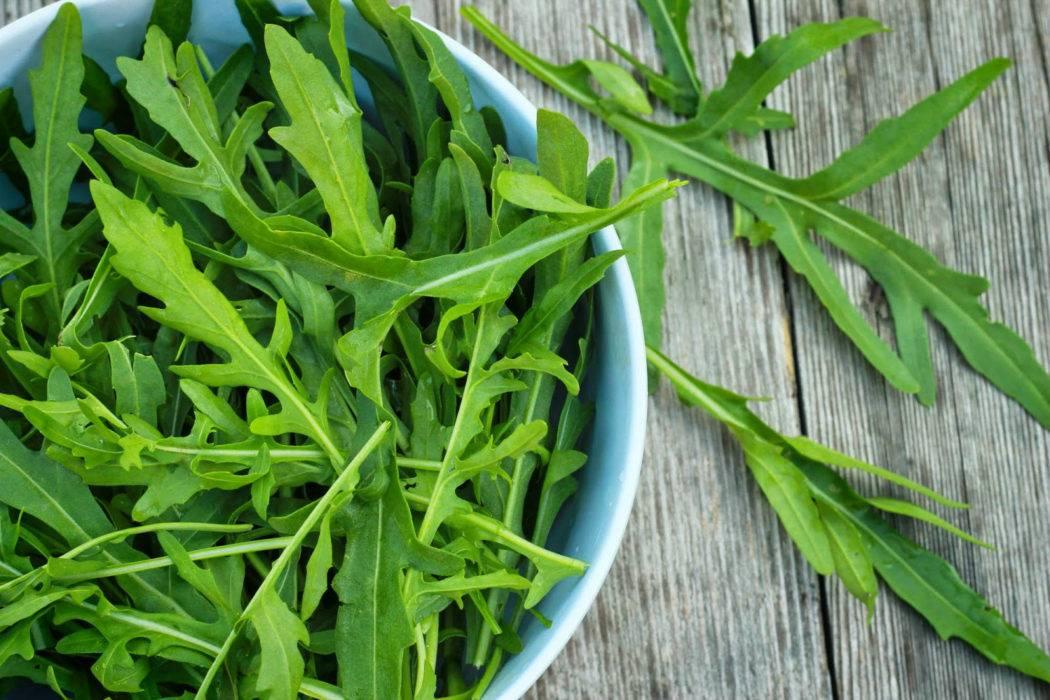Секреты выращивания рукколы из семян на подоконнике