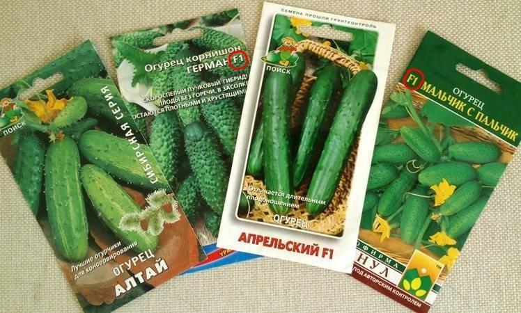 Лучшие сорта огурцов с фото для подмосковья для открытого грунта разного срока созревания, самые урожайные