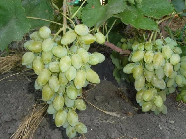 Чем полезен виноград — 10 свойств, подтверждённых научно