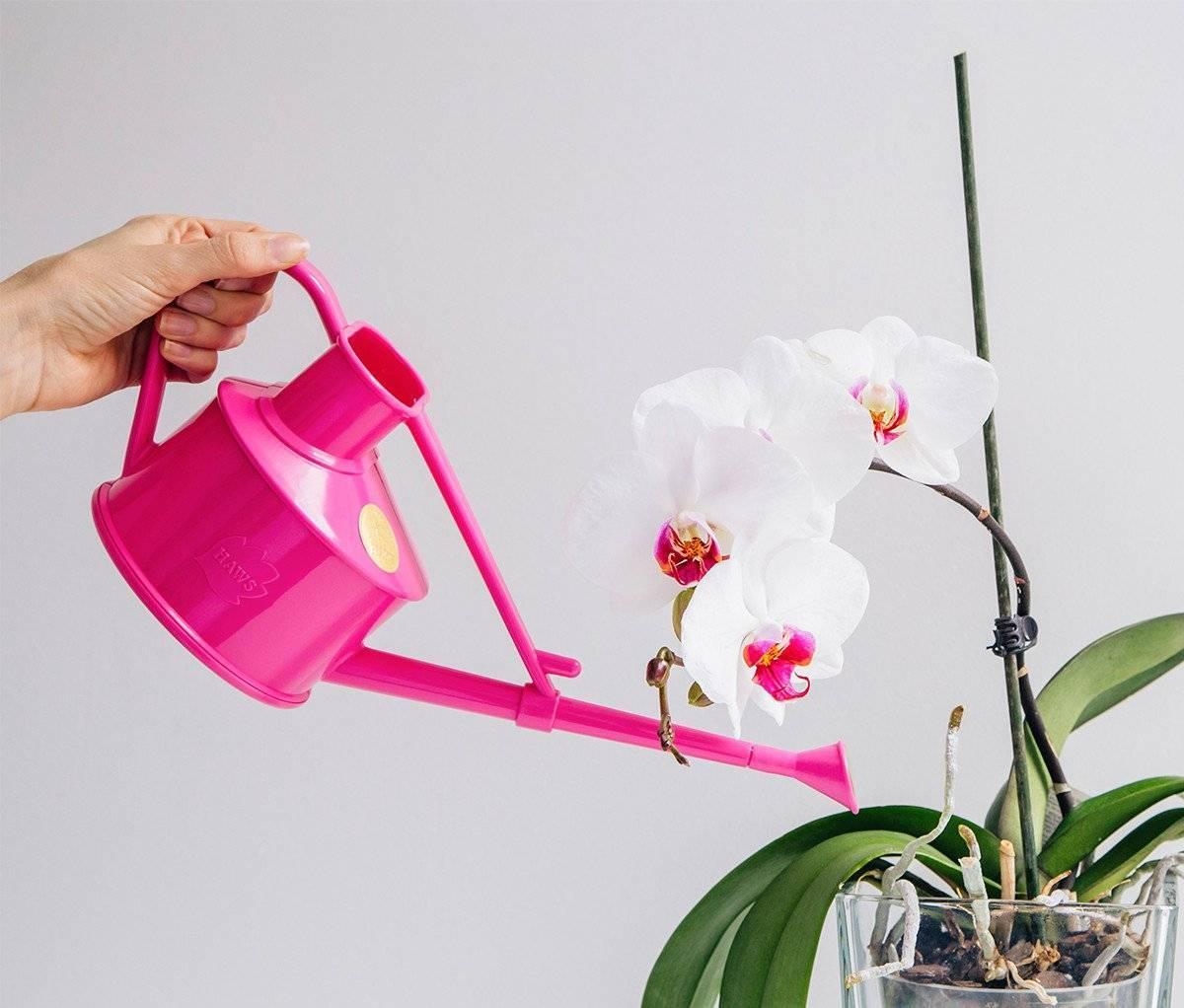 Как правильно поливать фаленопсис в домашних условиях, сколько миллилитров?
