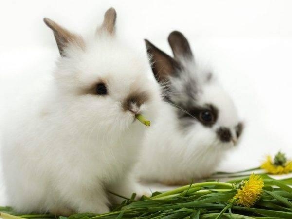 Интересные факты о кроликах и о кролиководстве