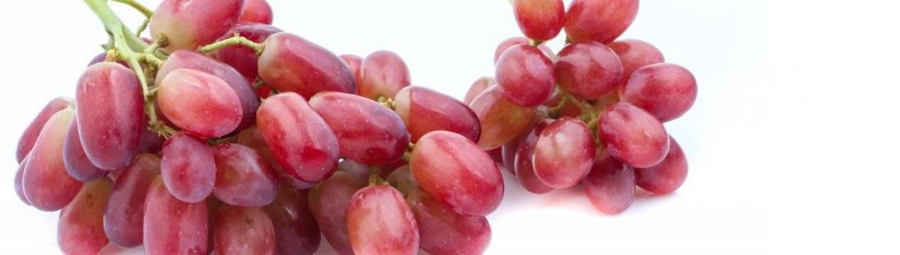 Виноград ягуар: описание и характеристика сорта, особенности посадки и ухода за виноградом, фото, видео