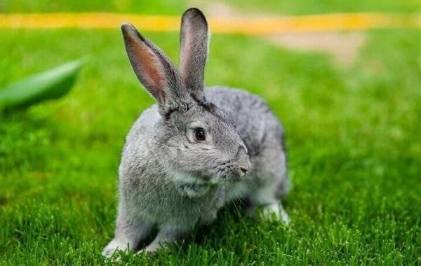 Оплодотворение кроликов искусственным методом — поясняем суть