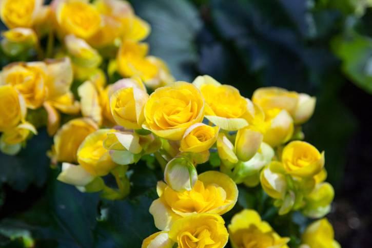 Неприхотливые комнатные растения с фото и названиями, цветущие круглый год