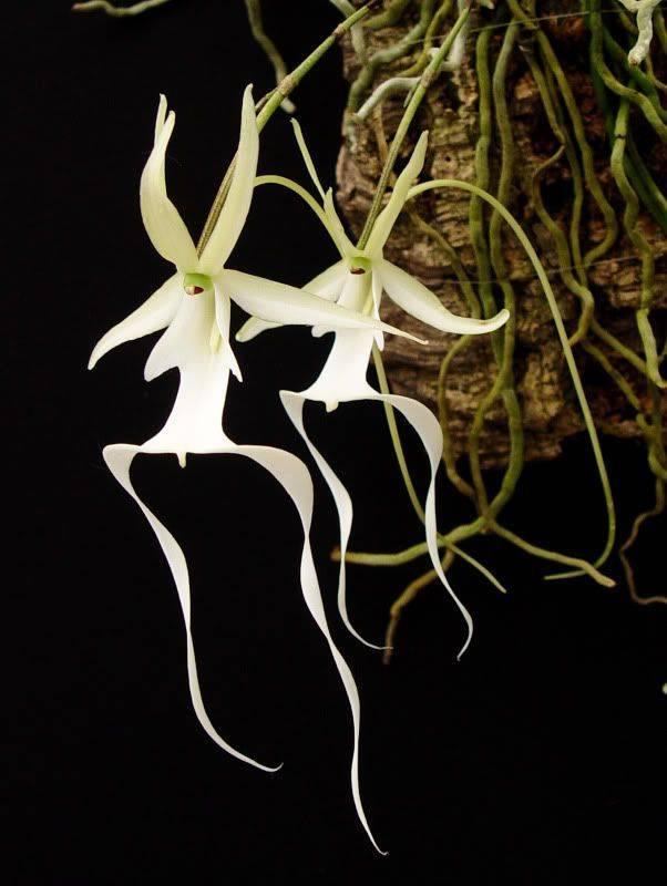 Как вырастить в домашних условиях орхидею: виды размножения, условия выращивания и особенности ухода - sadovnikam.ru