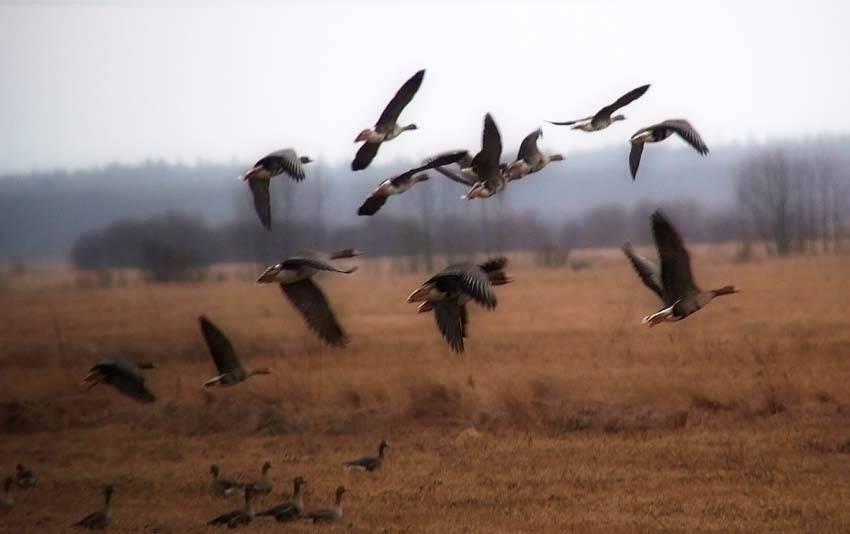 Открытие весенней охоты 2020 - сроки и правила охоты