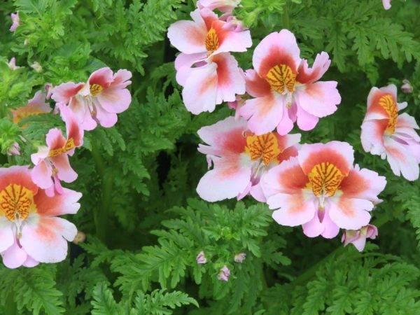 Цветы, похожие на орхидею: как они называются, какие существуют комнатные и маленькие виды, какие похожи на животных