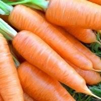 Посадка моркови под зиму 2021 года
