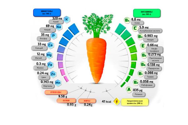 Женщинам на заметку: можно ли есть морковь при беременности?