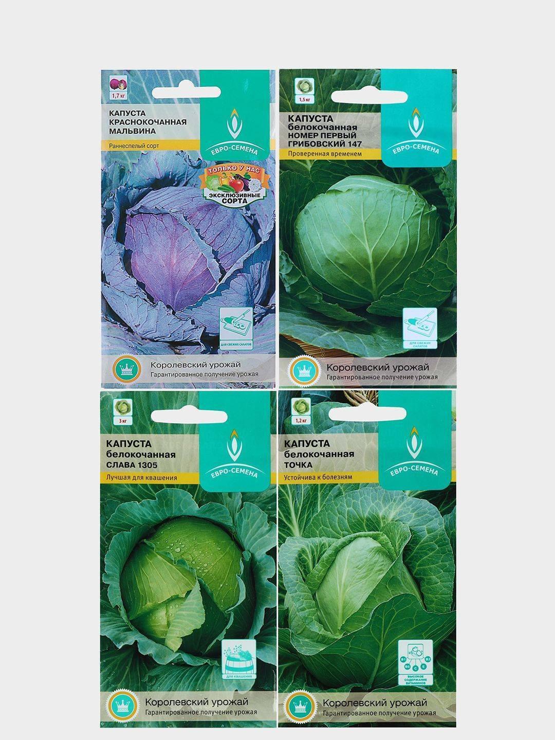 Капуста белокочанная крюмон f1. краткий обзор, описание характеристик brássica olerácea - все сорта - интернет магазин