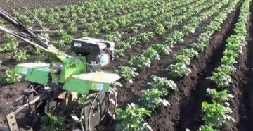 Как окучивать картофель мотоблоком и культиватором: полезные советы