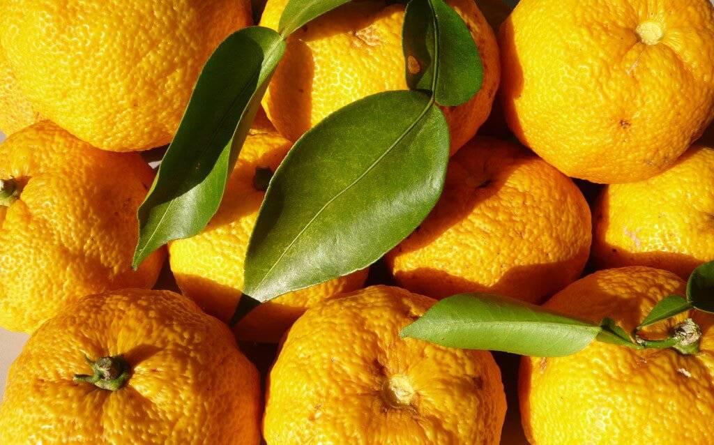 Японский лимон-юзу