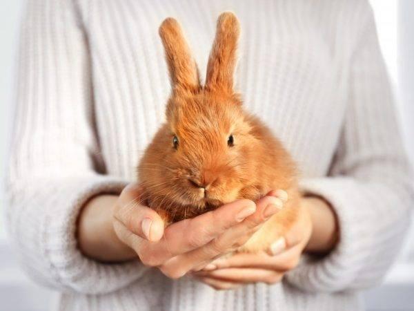 Лечение бактериальных инфекций у животных в ветеринарии — использование дитрима, инструкция по применению
