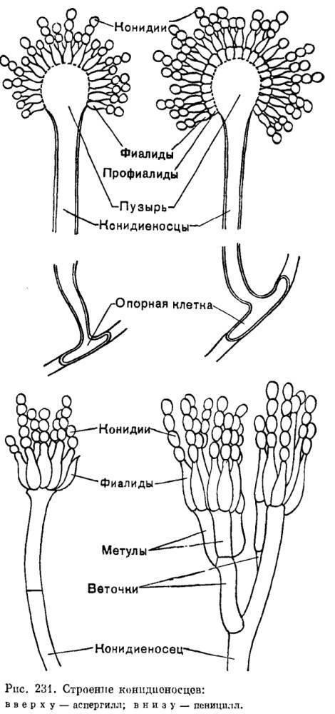 Сферопсидальные   справочник пестициды.ru
