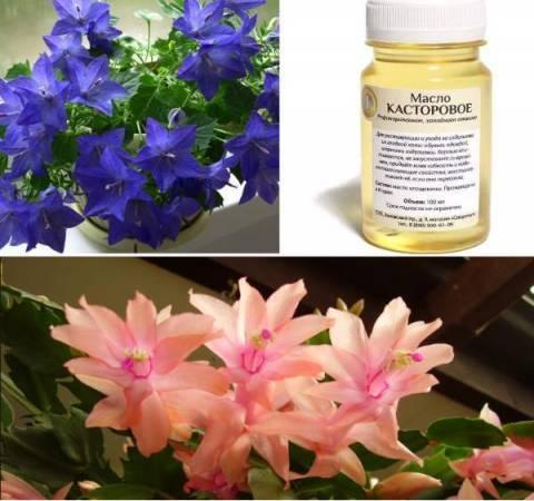 Касторовое масло: правила применения для цветов, отзывы садоводов