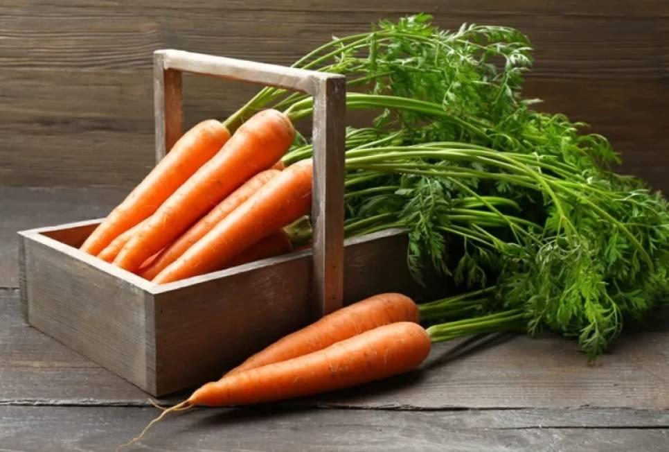 Самые лучшие семена моркови для открытого грунта
