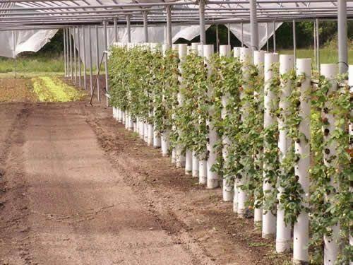 Вертикальные грядки для выращивания клубники
