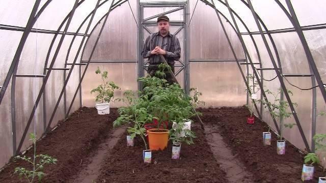 Как садить помидоры в теплице из поликарбоната