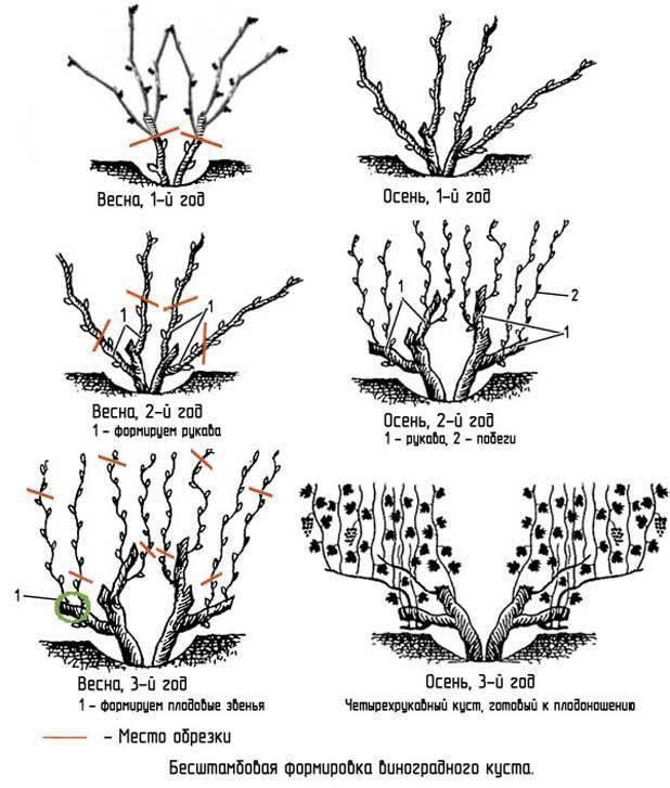 Обрезка винограда осенью: как правильно обрезать, схемы