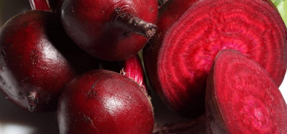 Как растет свекла: выращивание и уход для крупного урожая